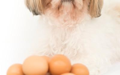 ¿Puedo Dar Huevo A Mi Perro? ¿Crudo O Cocido?